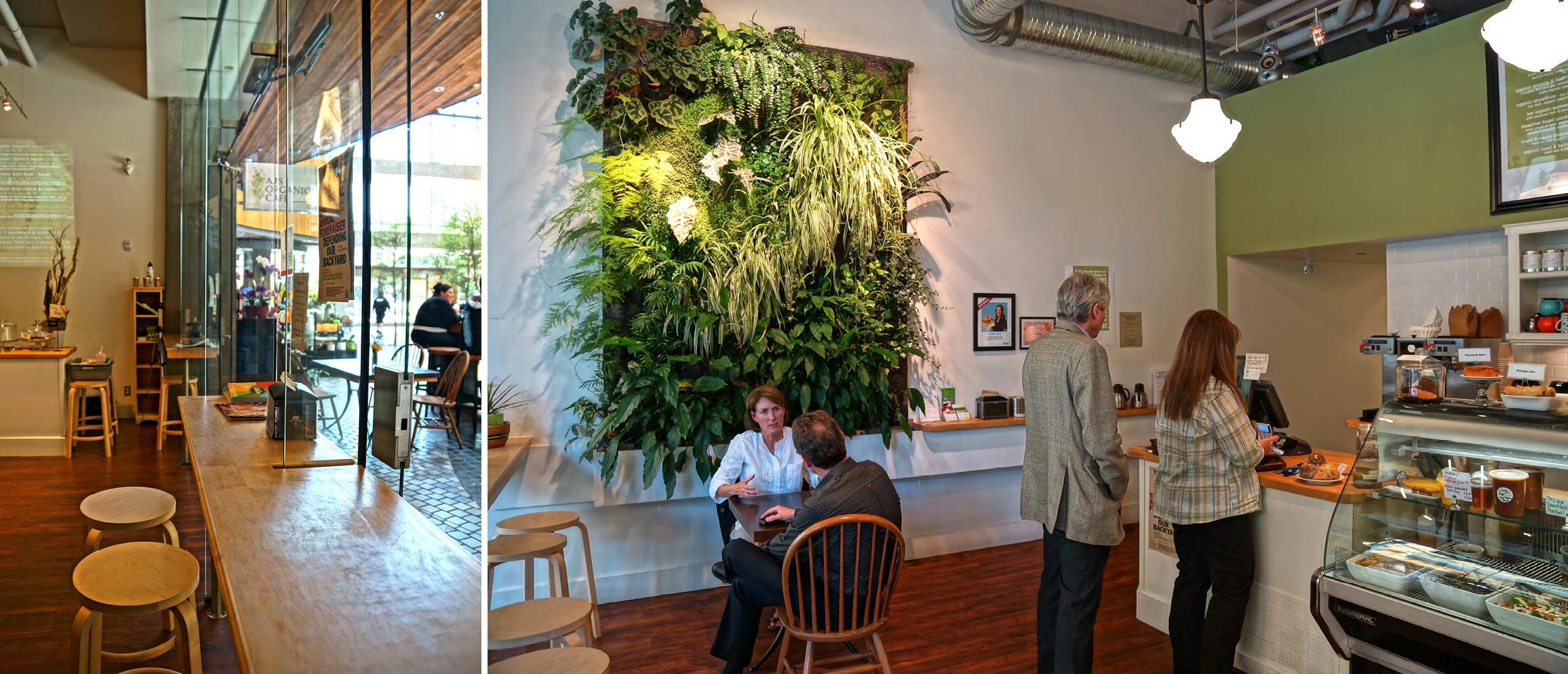 ajs organic cafe dambrosio architecture urbanism